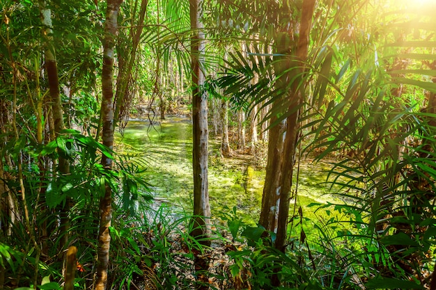 熱帯林の小川