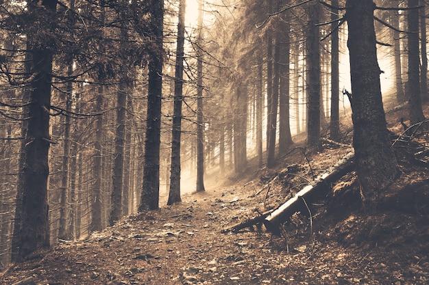 Тропа в темном сосновом лесу