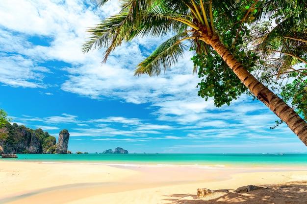 熱帯のビーチでヤシの木