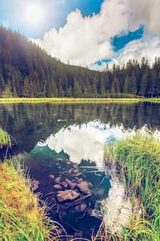 夏の山湖の森