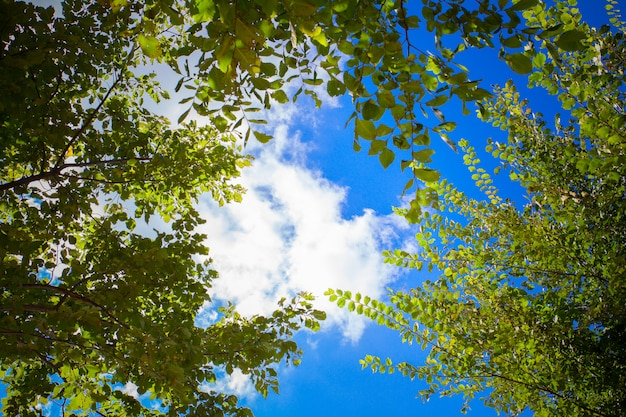 緑の葉と太陽