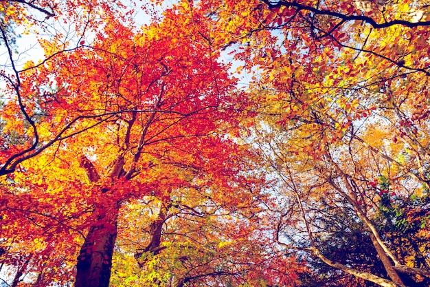 森の黄金の秋
