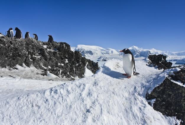 ペンギンのグループ
