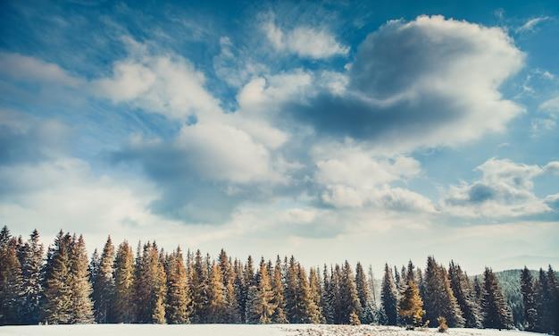 森の上の曇りの青い空。カルパチア人。
