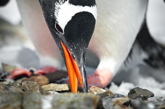 黒と白のペンギン