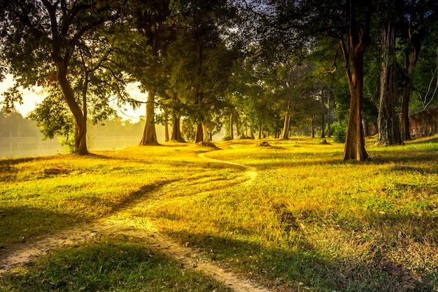 美しい夏の風景の森林歩道