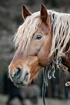 美しい馬をクローズアップ