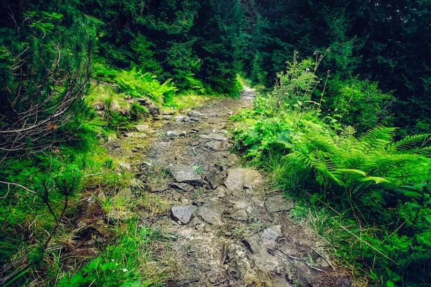 小さな緑の道