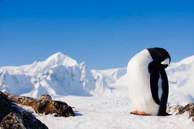 Пингвин на скалах