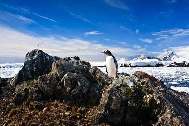 ペンギンが巣を守る