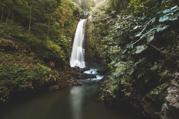 Водопад в джунглях. зеленый пейзаж. бали.