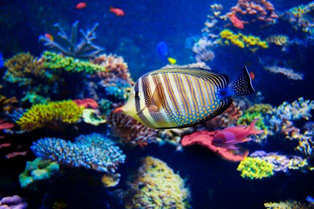 Красочные аквариумные рыбки крупным планом