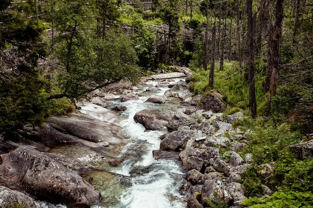 森と小さな川のある谷。タトラ。
