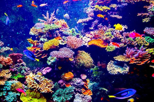 Сингапурский аквариум