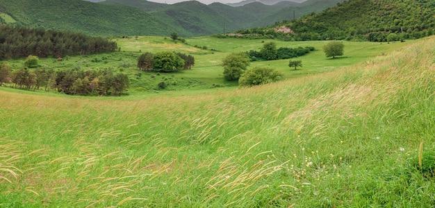 山の緑の牧草地