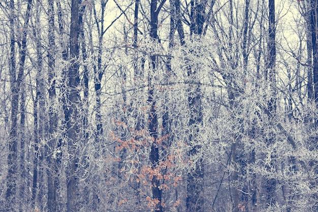 冬の木の背景
