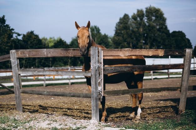 フェンスの後ろにある馬