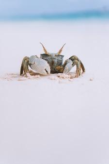 海沿いのビーチで小さなかわいいカニ