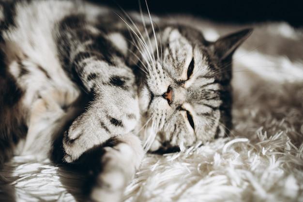Сонная домашняя кошка на диване