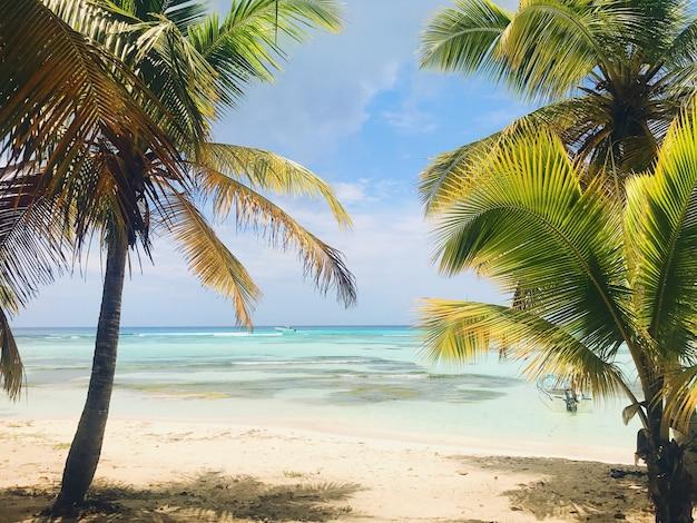 Зеленые ладони поднимают к небу на солнечном пляже