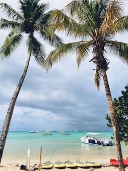 ドミニカ共和国の浜辺の曇った空に高さのヤシの木が浮かぶ