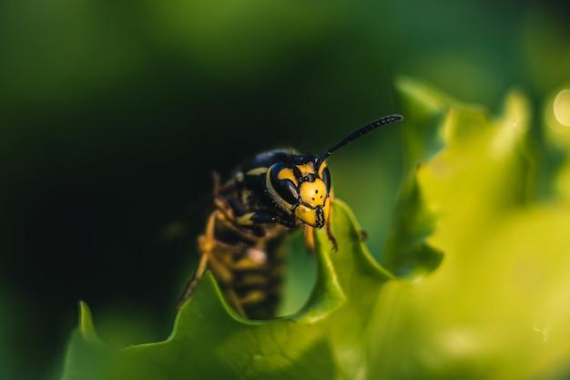 Шершень на зеленом листе