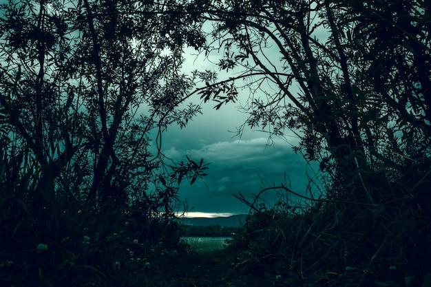 暗い森からアーチの形でぶら下がっている木。フォレストを終了します。陰鬱で不気味な木。