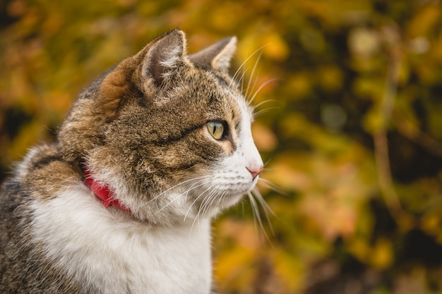 美しい秋の背景に飼い猫の肖像画