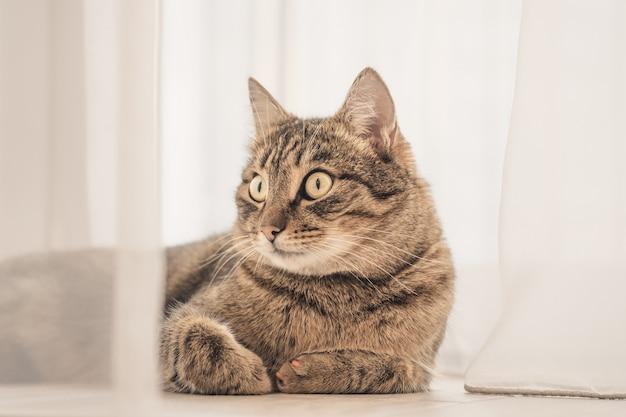 驚いた大きな目を持つ飼い猫の肖像画