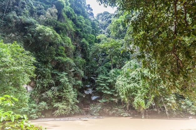 歩道と川のある森