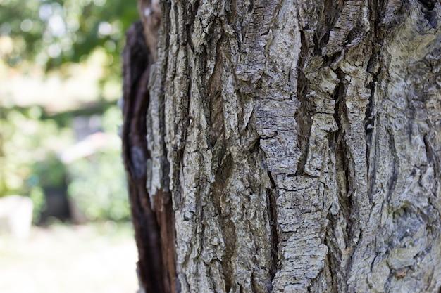木の樹皮をクローズアップ