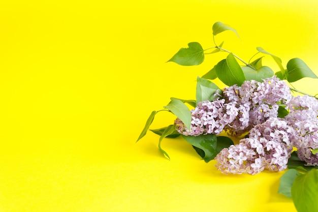 Ветвь фиолетовой сирени на желтом цвете. вид сверху, копия.