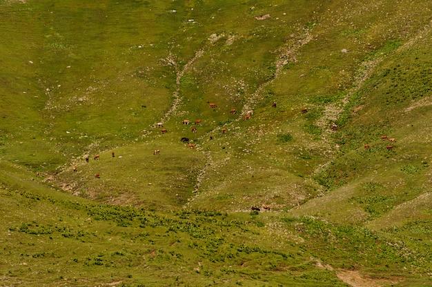 馬と牛が放牧する春の緑の草の丘の背景