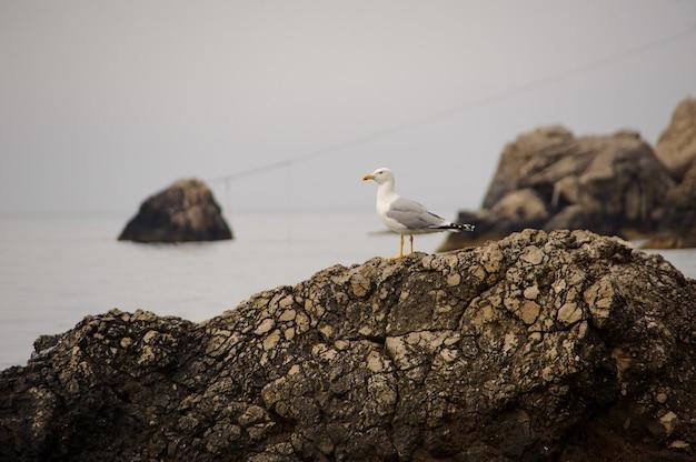 Чайка на скале у моря