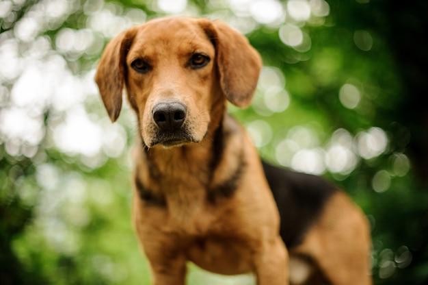 森の中に立っている茶色の子犬の肖像画