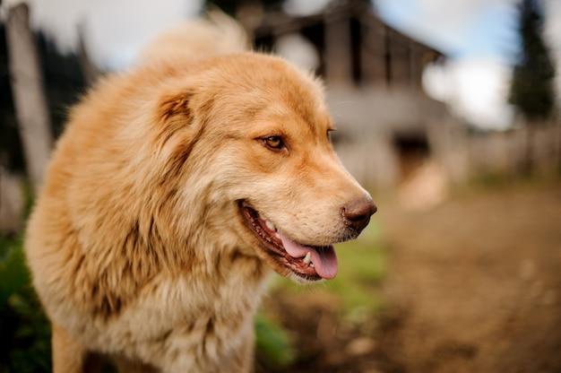 外に立っている笑顔の明るい茶色の犬の肖像画