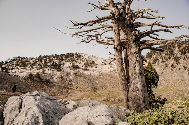 トルコの高地の森の風景