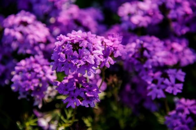 紫色の花と茂みのクローズアップ