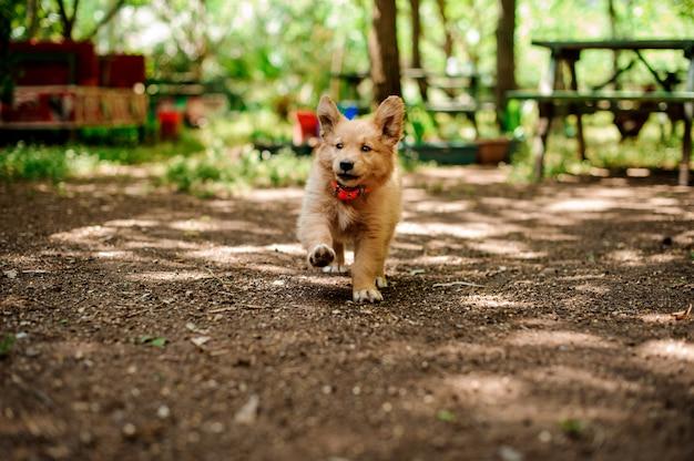 幸せな子犬は庭の花で実行されます