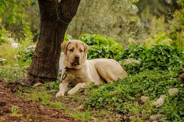 犬は森の地面にあります。
