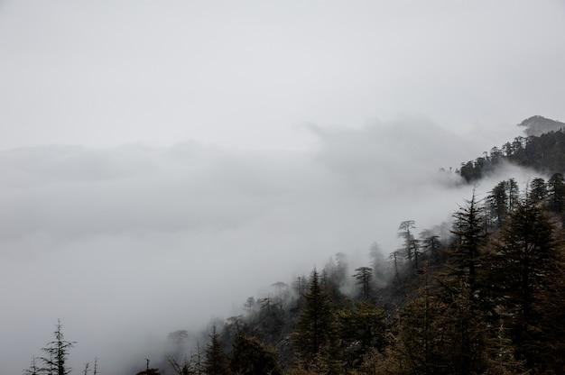 霧の中で山の斜面の眺め