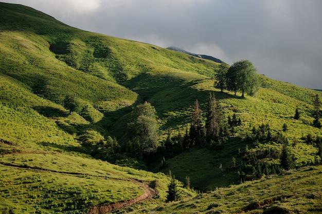 木で覆われた緑の芝生の丘の背景