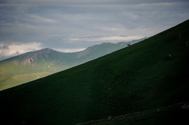 山を背景に傾斜した緑の芝生の丘の背景