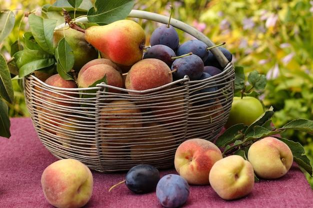Корзина с осенними фруктами: яблоки, груши, сливы и персики на столе в саду, некоторые фрукты лежат на столе, горизонтальная ориентация, крупным планом