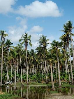 Высокие пальмы с отражением в воде, остров нуса пенида недалеко от бали