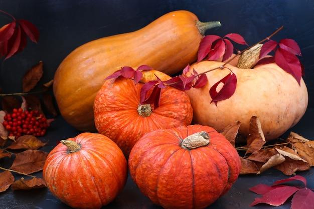 Яркие тыквы, осенний натюрморт, парад осенних овощей, горизонтальная ориентация, крупный план