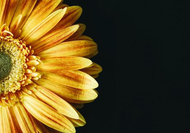 黒の背景に黄色の花