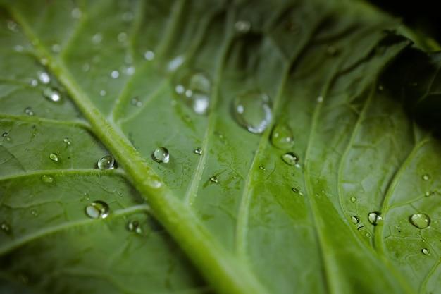 Утренняя капля росы на зеленом листе