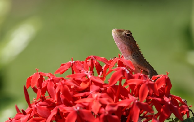 花びらに屋外のトカゲ