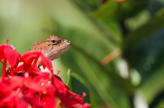 Ящерица макро на открытом воздухе